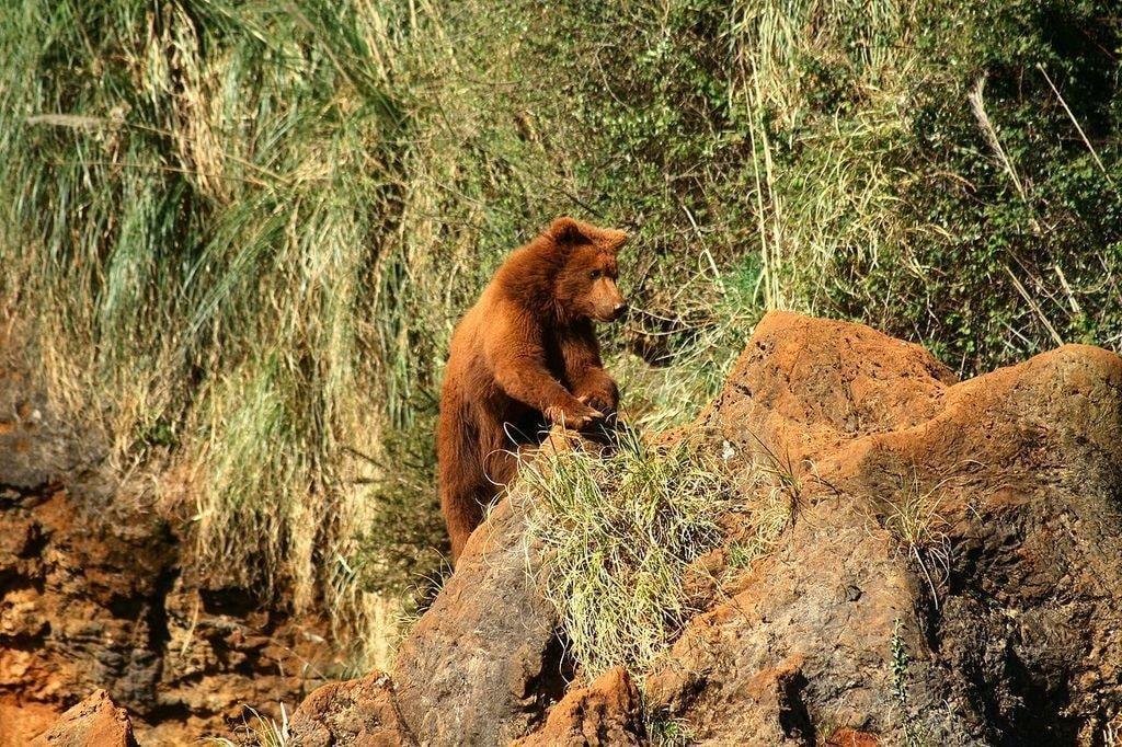 A bear at Parque de Cabárceno, Cantabria, Spain | ©Mario Modesto Mata / Wikimedia Commons