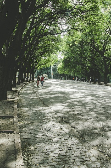 A street in a park