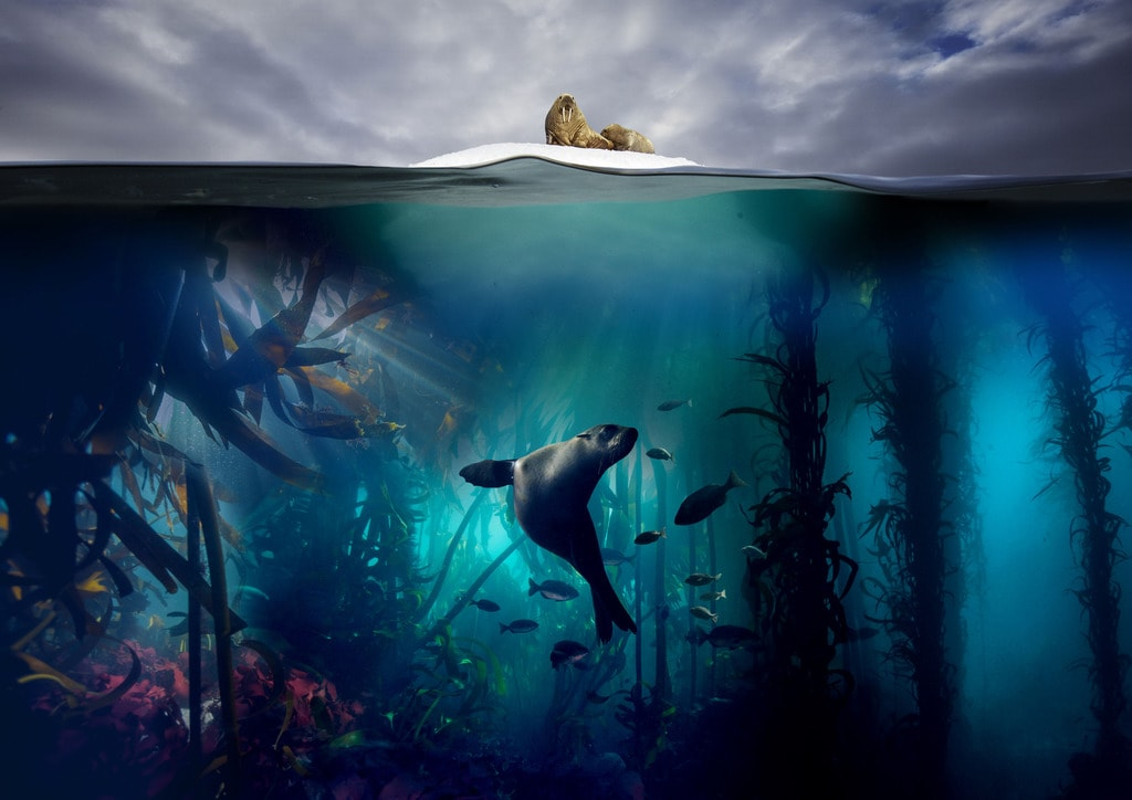 Blue Planet II   © BBC/Lisa Labinjoh/Joe Platko