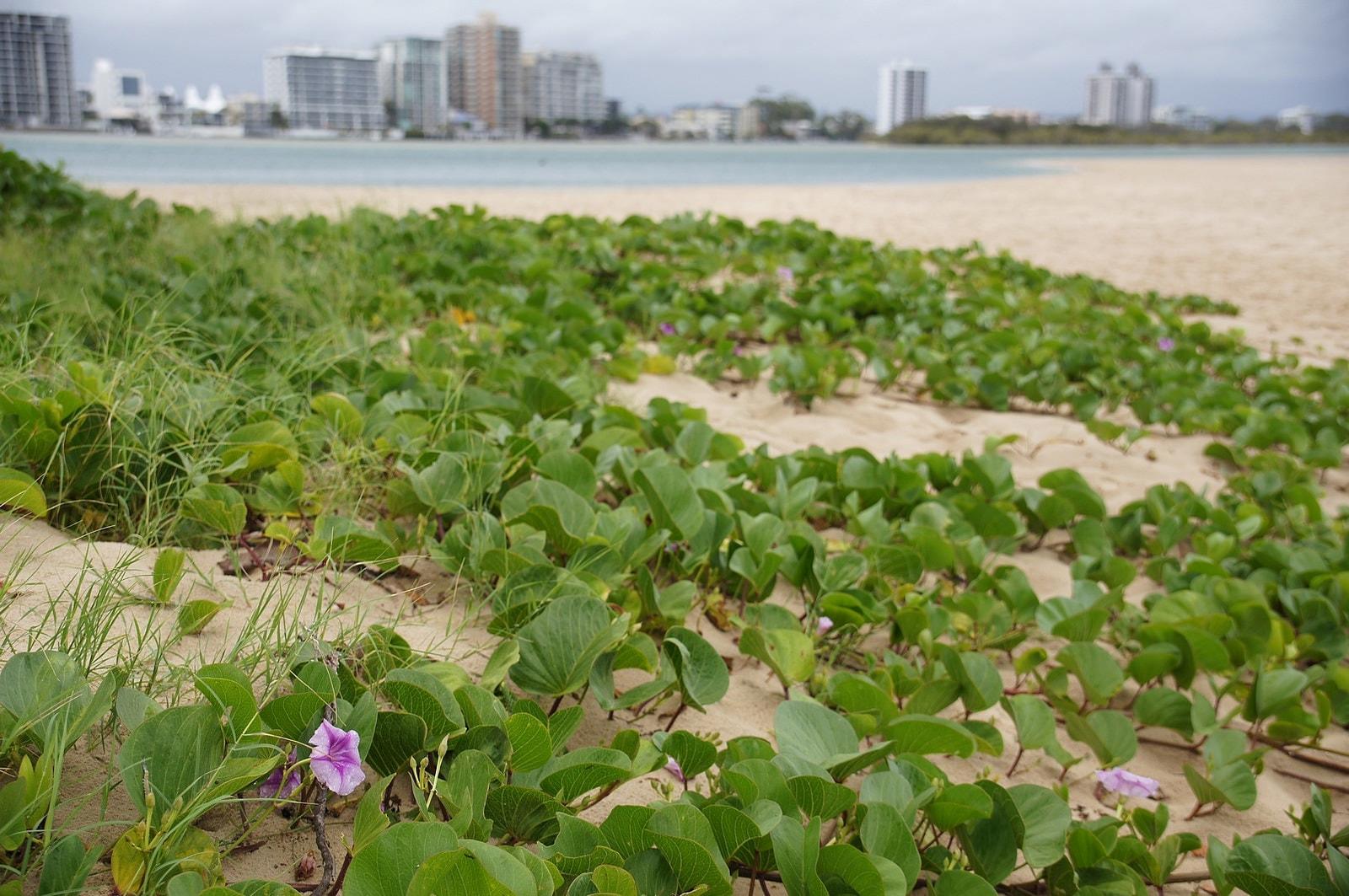 Cotton Tree Beach   © Tatters/Flickr
