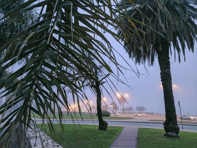 Palm trees in the fog