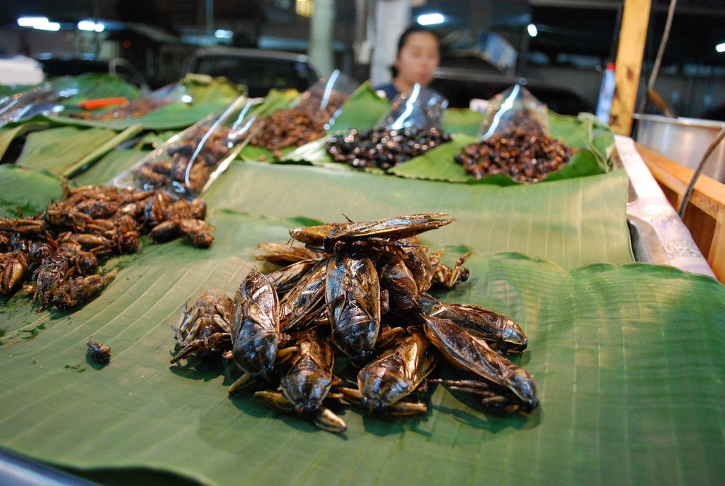 Insects to eat for sale