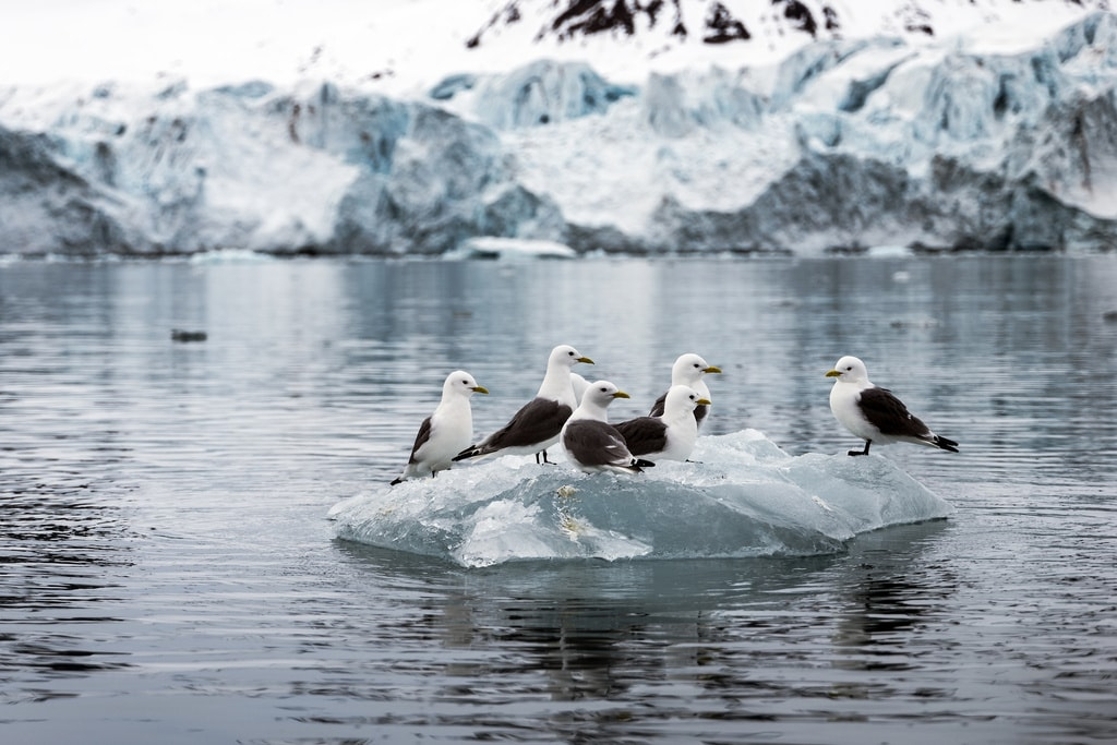 Birds on floating ice   © Christopher Michel /Flickr