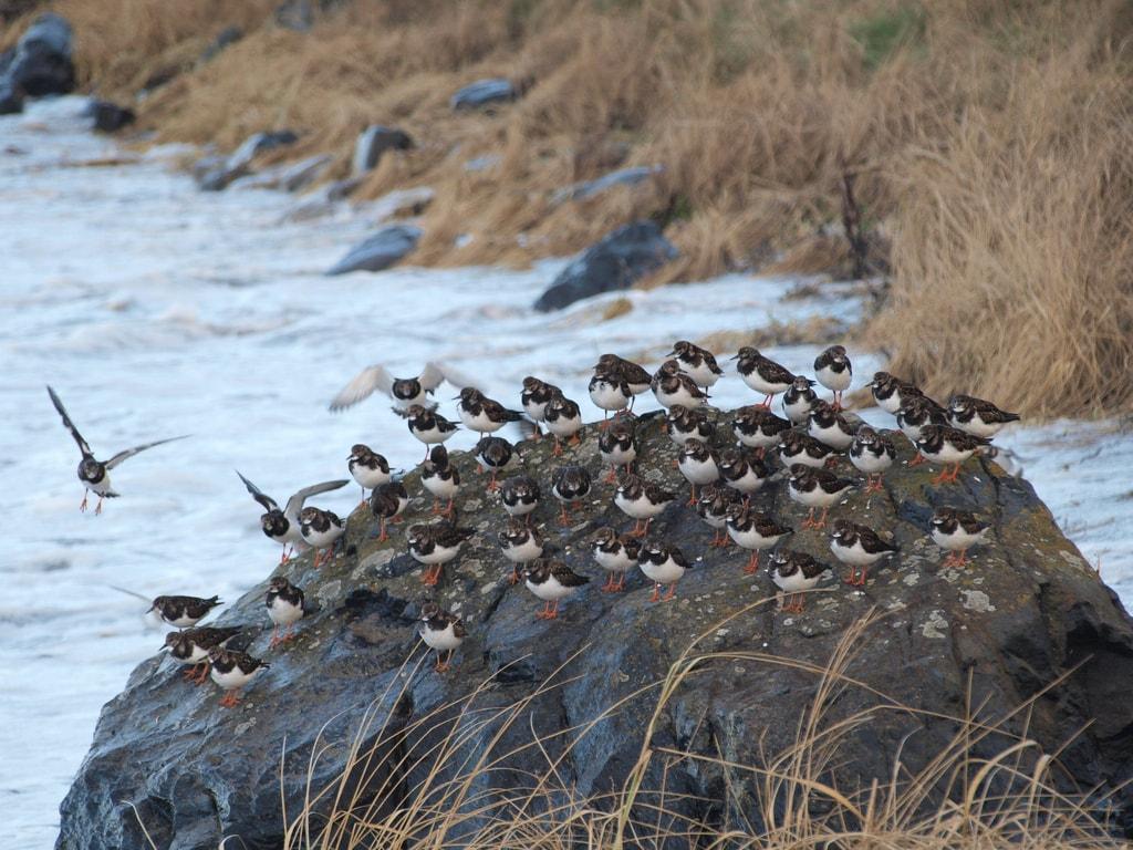 Crowded Rock, North Berwick | © Magnus Hagdorn / Flickr