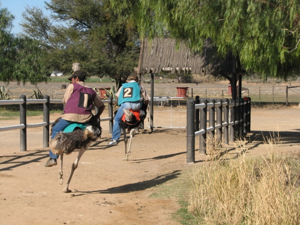Riding ostriches in Oudtshoorn