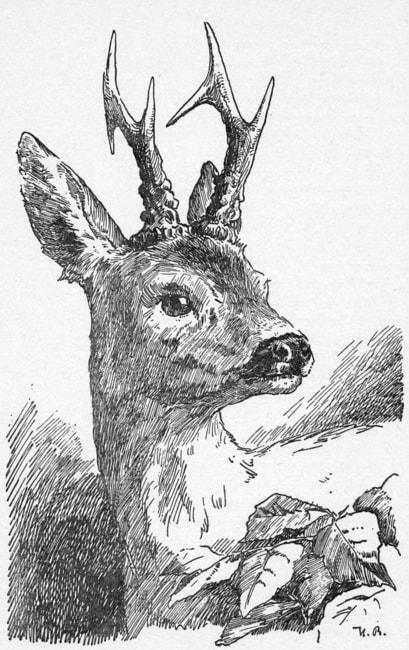 Bambi-Hans-Bertle