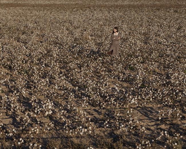 Cotton_lowres