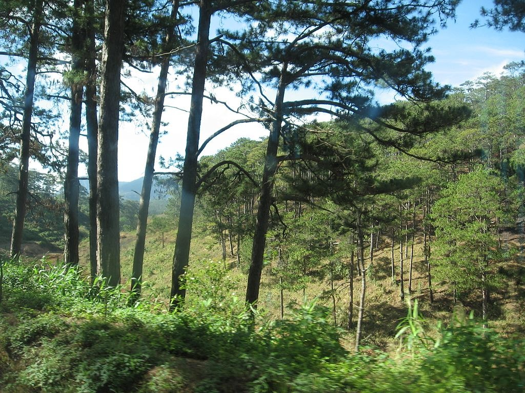 The beautiful forests of Dalat | © VCTBR/Wikicommons