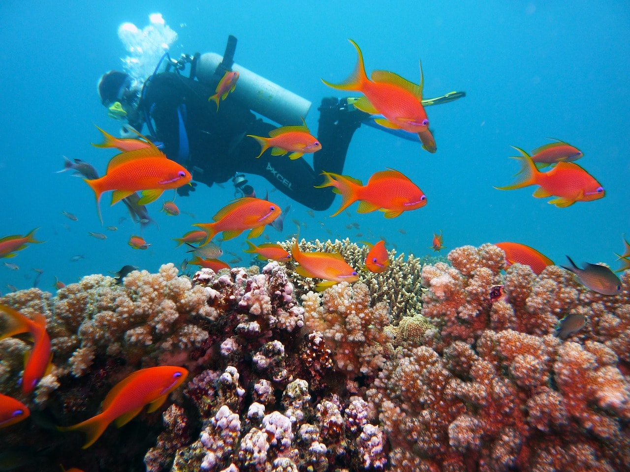 diving-1808717_1280
