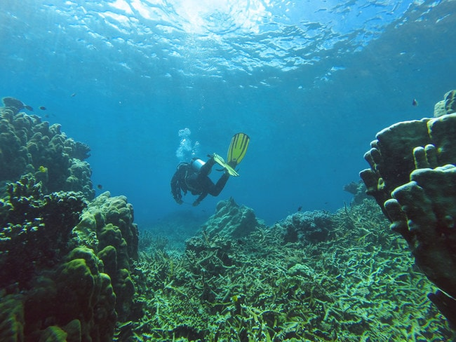 Diving in Salang Bay, Tioman Island