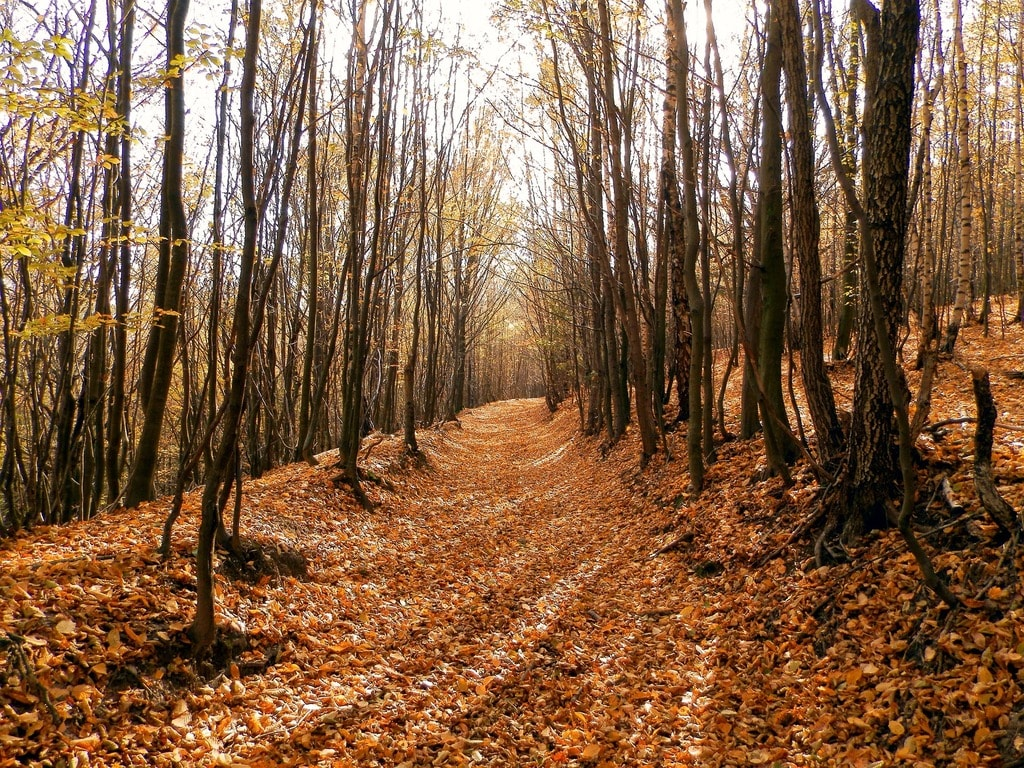 forest-1210898_1920