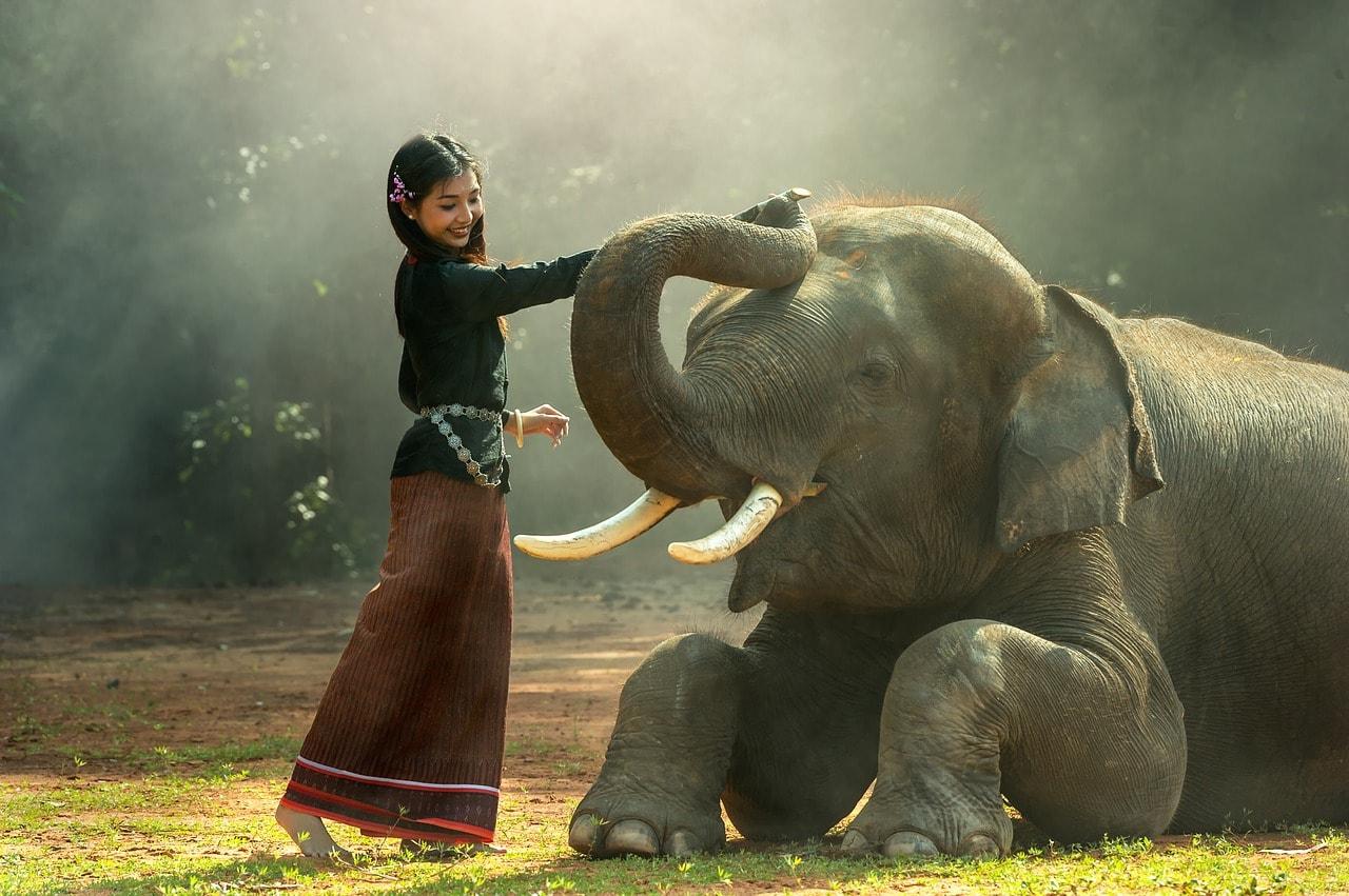 Elephant | ©Sasint/Pixabay