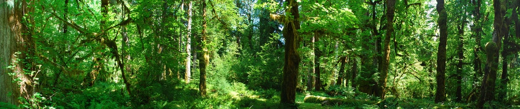 Hoh Rainforest | © Kurt Thomas / Flickr