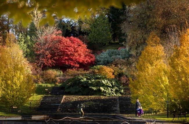 Hoststad+Botaniska+Frida+Winter17434