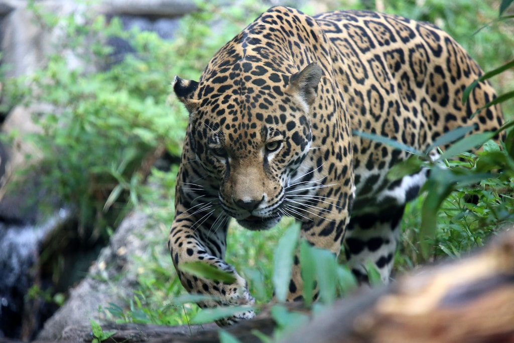 Costa Rica S Rarest Creatures And Where To Find Them