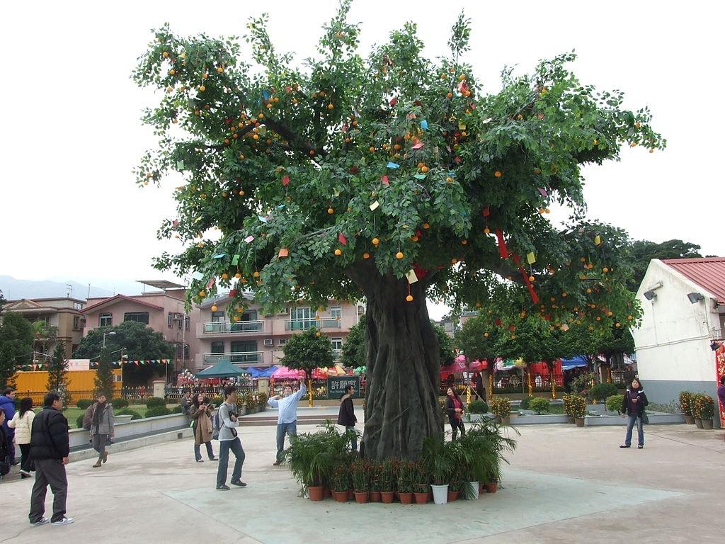 Lam Tsuen Wishing Tree Hong Kong