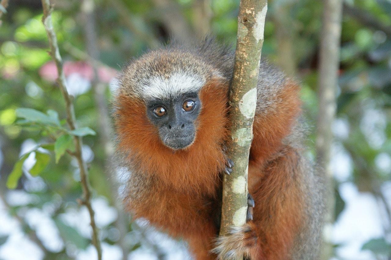 monkey-365805_1280