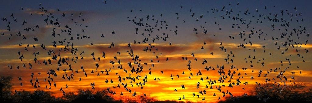 A flock of birds flying