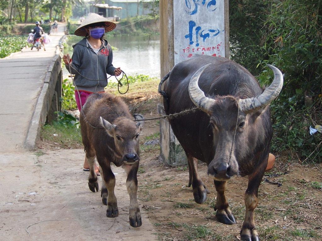 Rural Vietnam is simply wonderful   © Matthew Pike