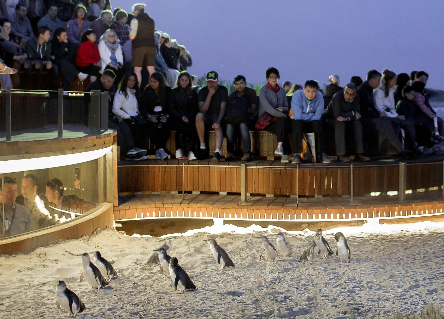 Penguins Plus - Cropped