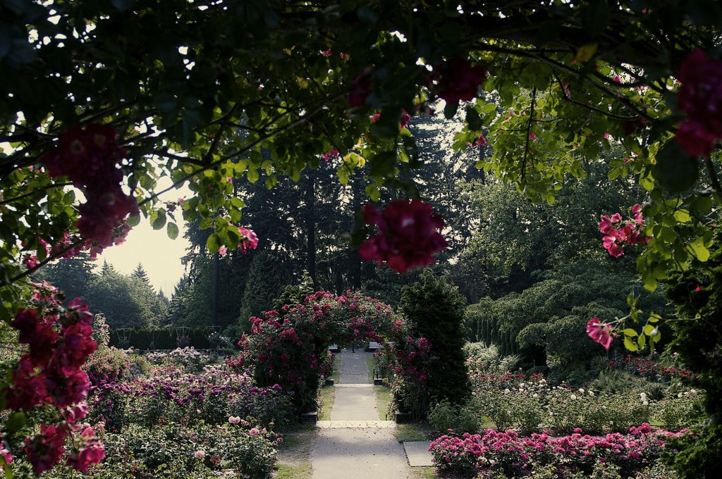 Portland's Rose Garden | © Hitchster / Flickr