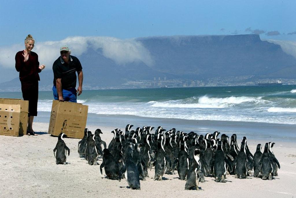 Save_the_Seabirds_2