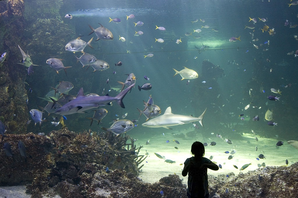 Sea Life Sydney Aquarium | © Maksym Kozlenko_Wikimedia Commons