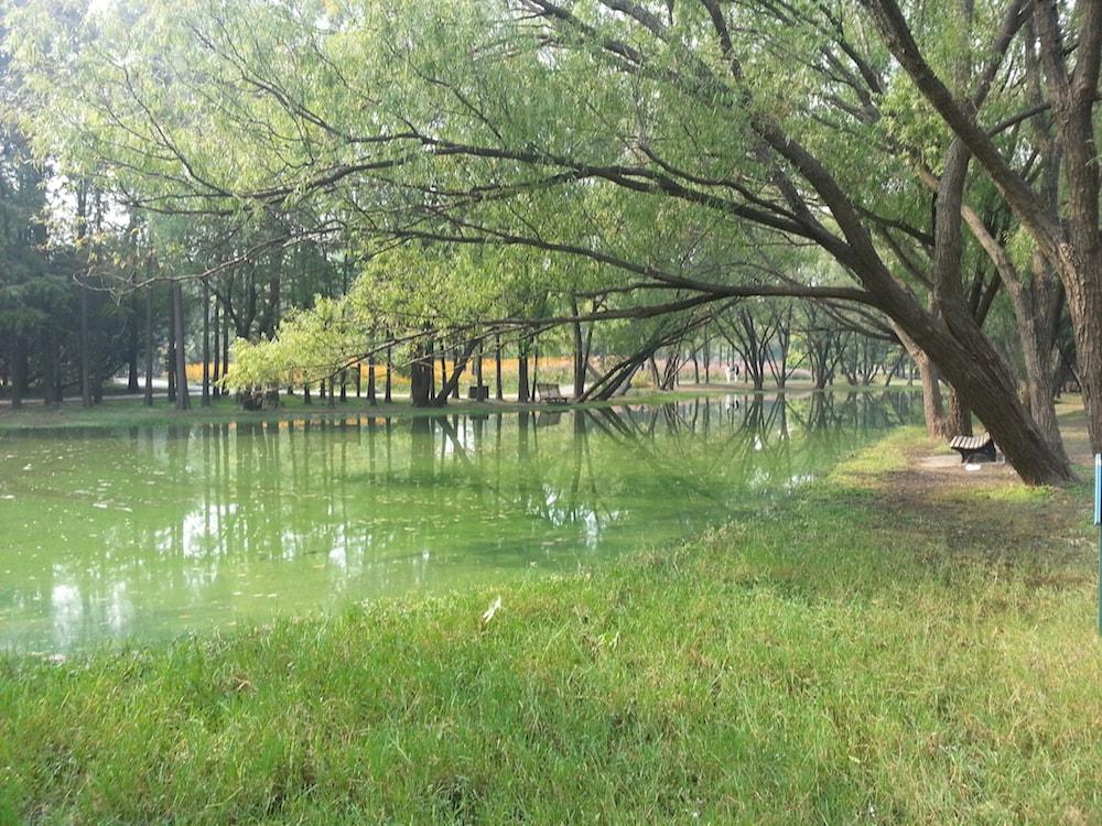 shanghai forest park
