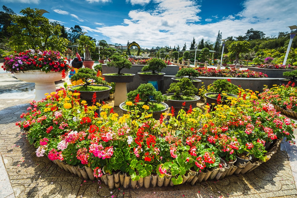 The lovely Dalat Flower Park | © Zhukov Oleg/shutterstock