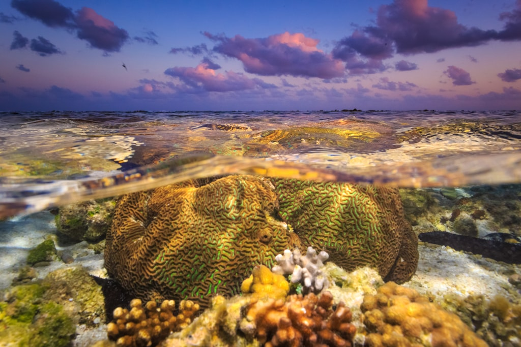 Great Barrier Reef at sunset, Australia | © Michael Smith ITWP/Shutterstock