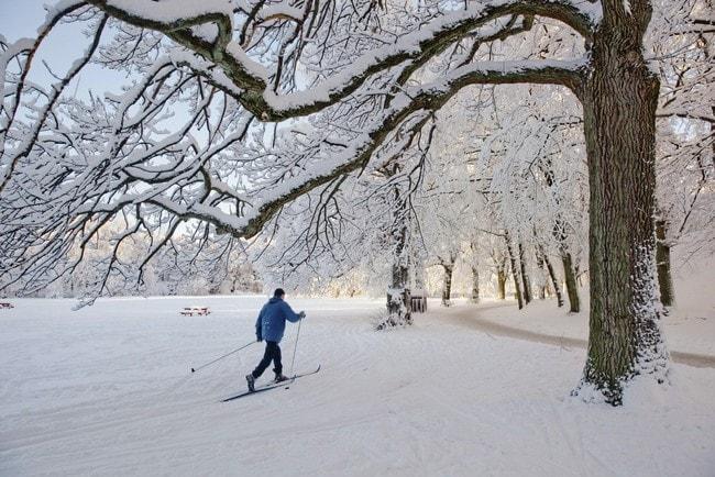 Cross country skiing in Slottsskogen, Gothenburg's main park.