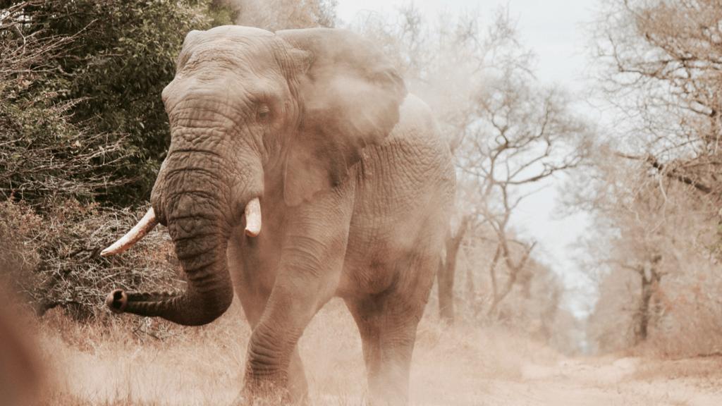 Stereotypes_elephant