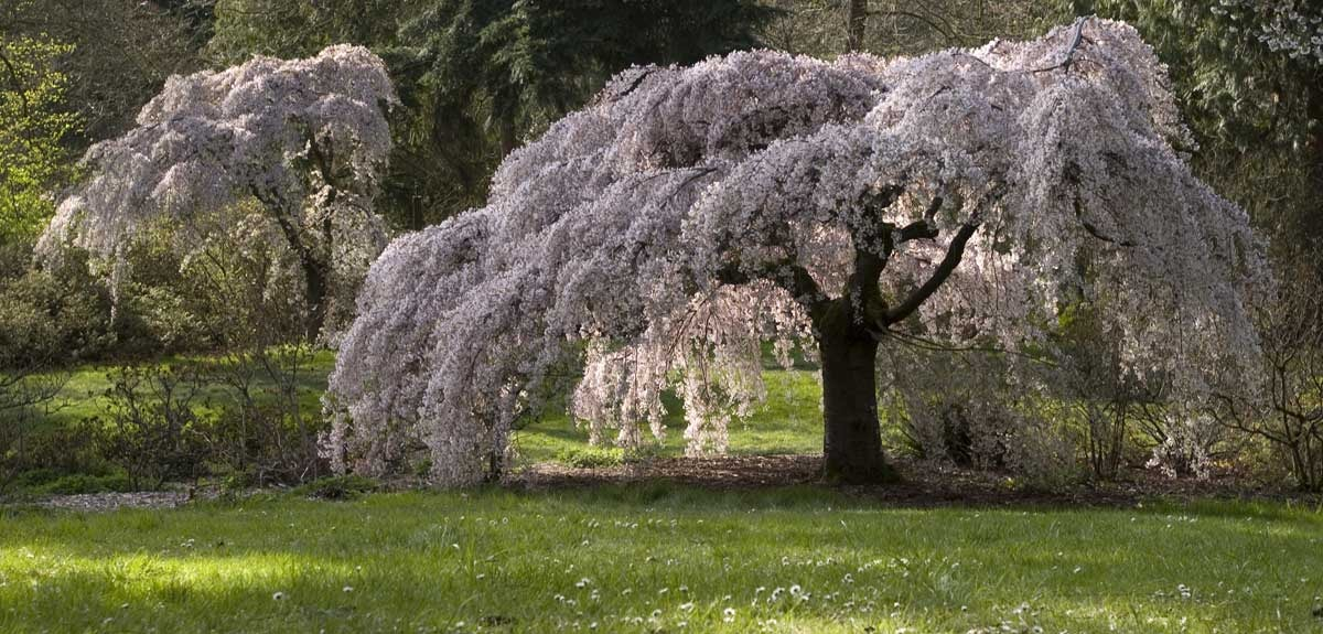 Washington Park Arboretum | © Curt Smith / Flickr