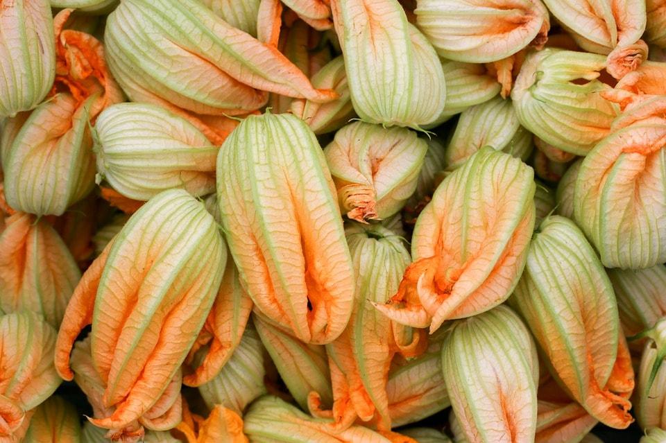 Pumpkin flowers that feature in Piedmontese antipasti | © Pixabay