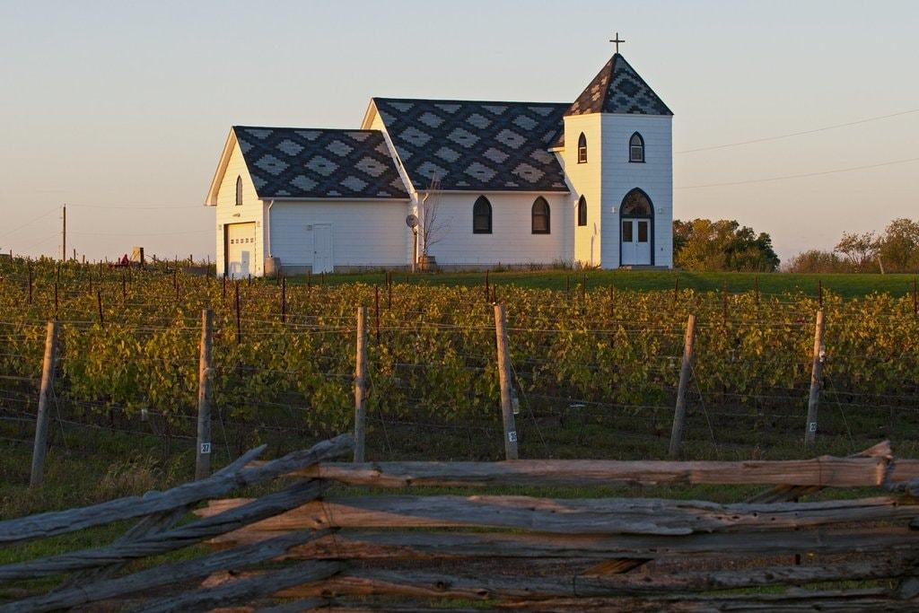 Vineyard in Prince Edward County   © OTMPC