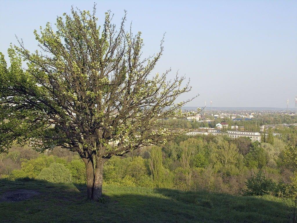 Lysa Hora Kiev