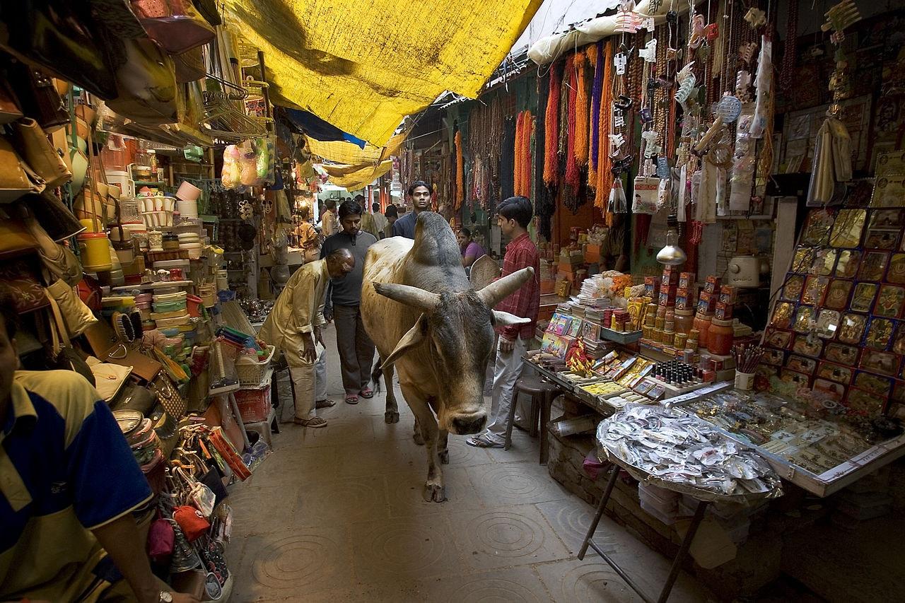 1280px-India_-_Varanasi_buey_in_market_-_1702