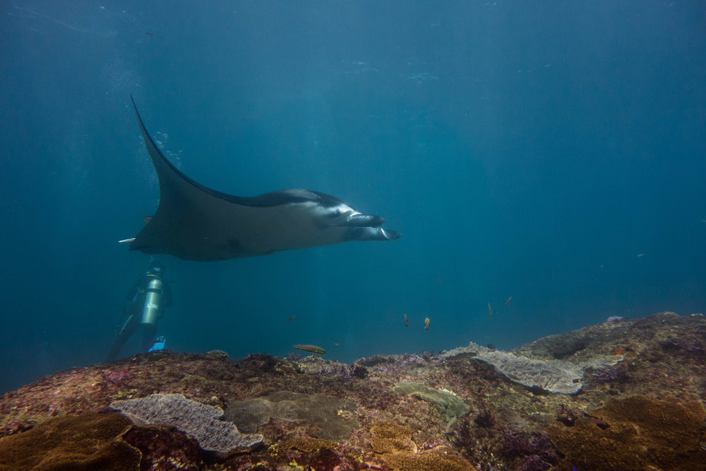 Diving with mantas | © Stef Bemba / Flickr
