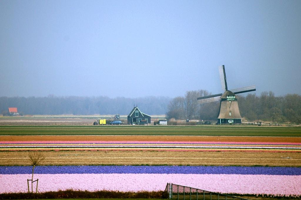 Netherlands | © David Evers / Flickr