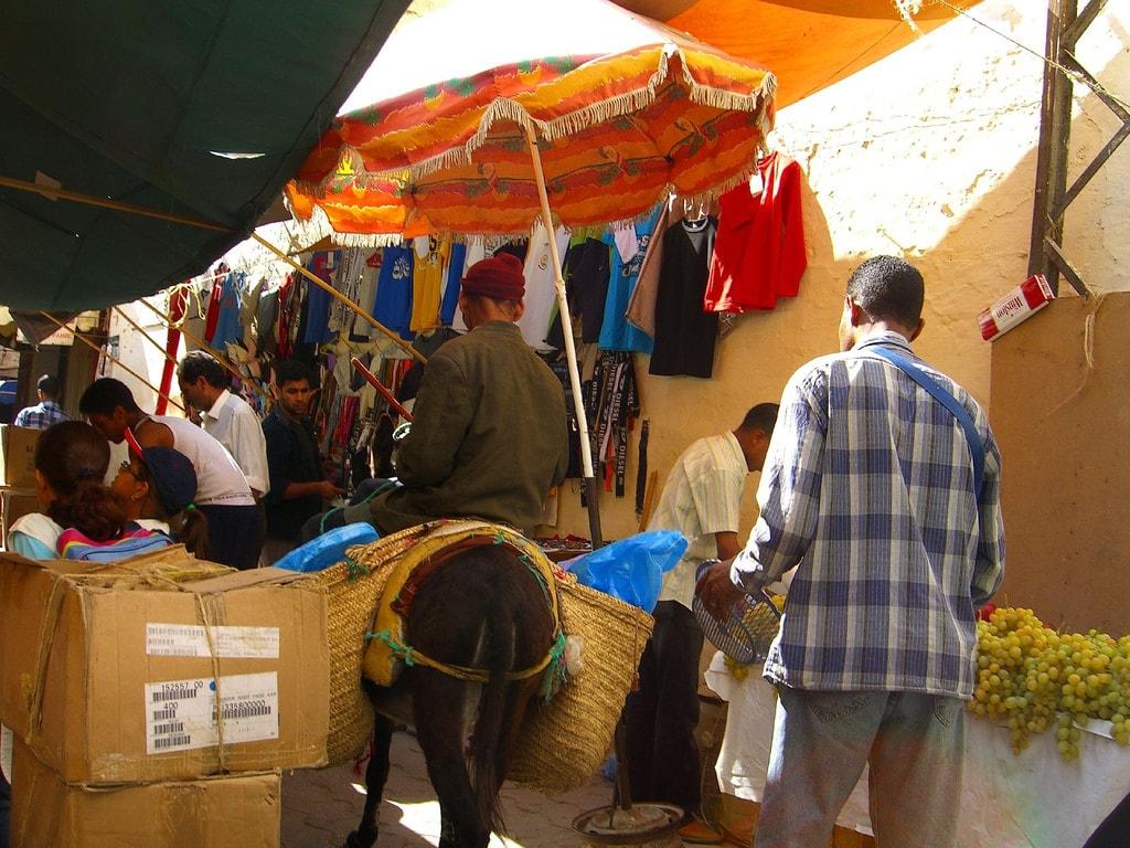 Donkey in Meknes