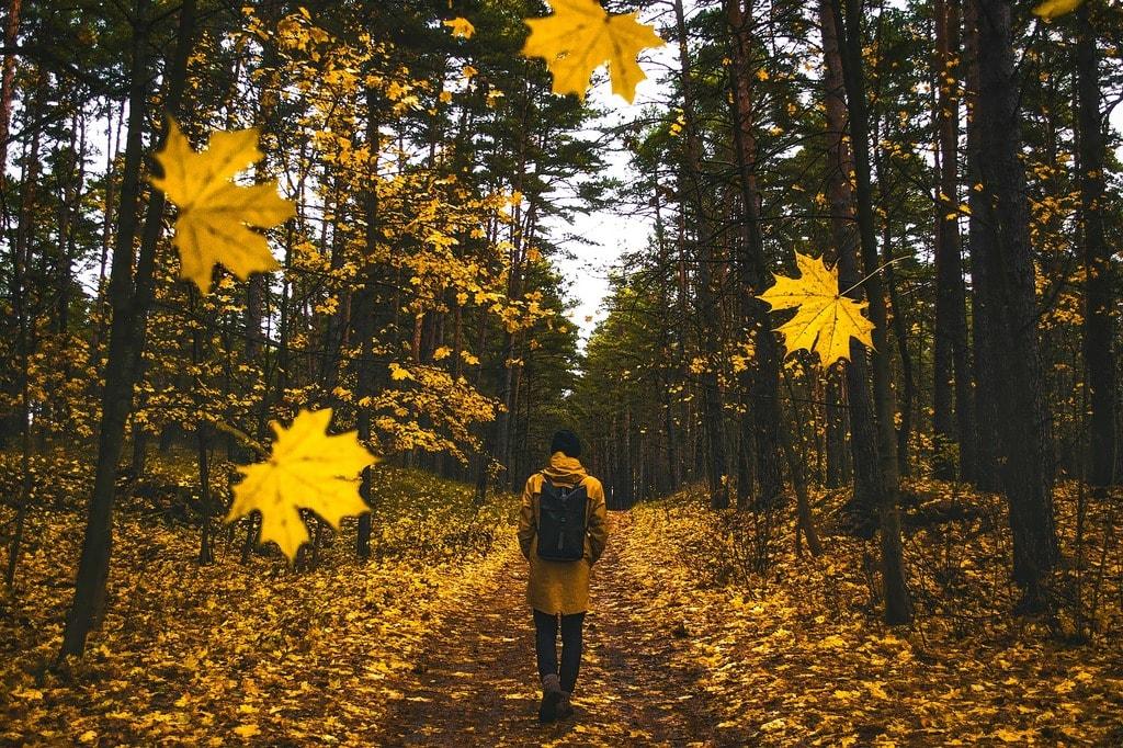 Autumn walk | © Pixabay
