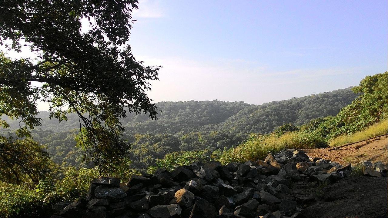 Beautiful_Evening_at_the_Sanjay_Gandhi_National_Park,_Mumbai