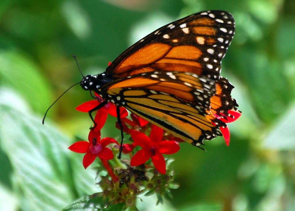 butterfly botanical gardens