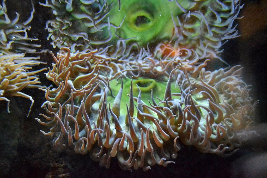 cabrillo-marine-aquarium