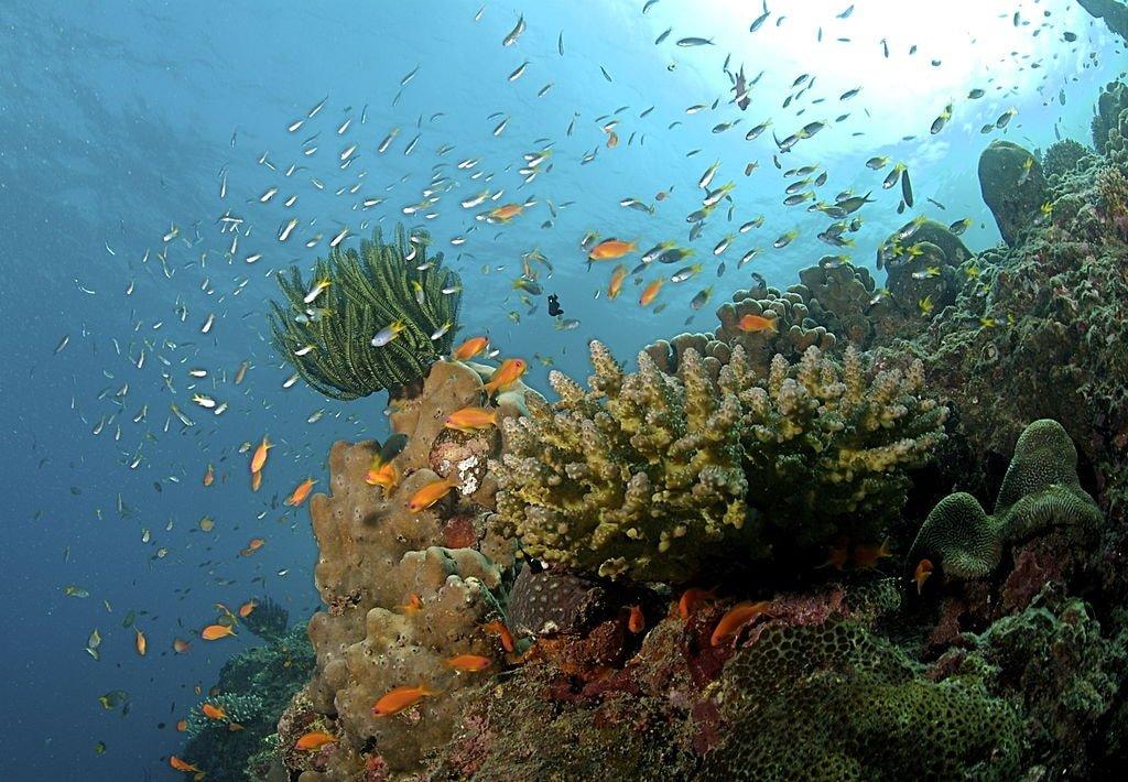 Coral reef Andaman