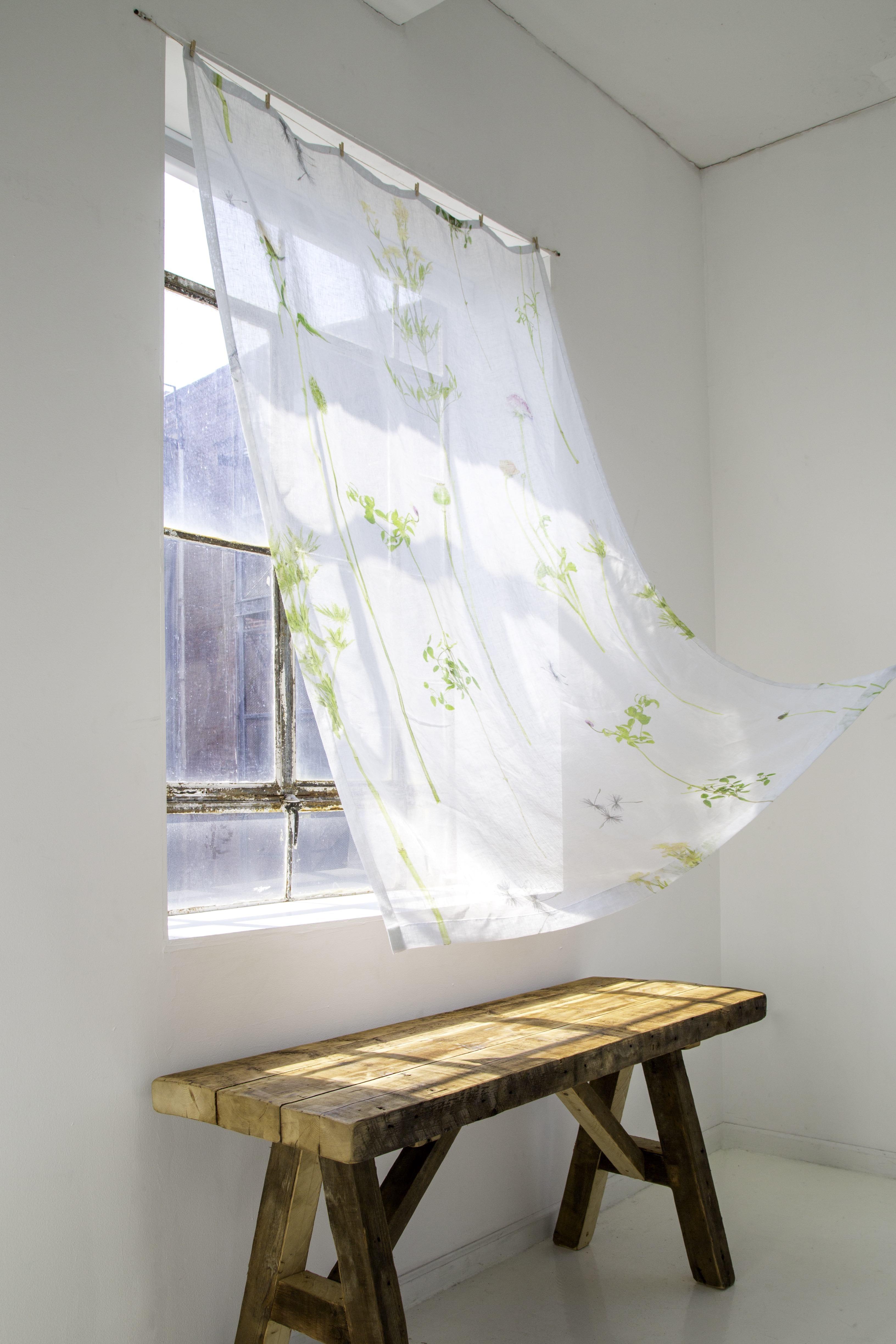 FloraWildflower 1 (credit Cope)