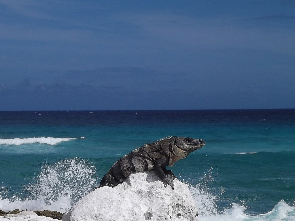 The Most Beautiful Beaches In Cozumel Mexico