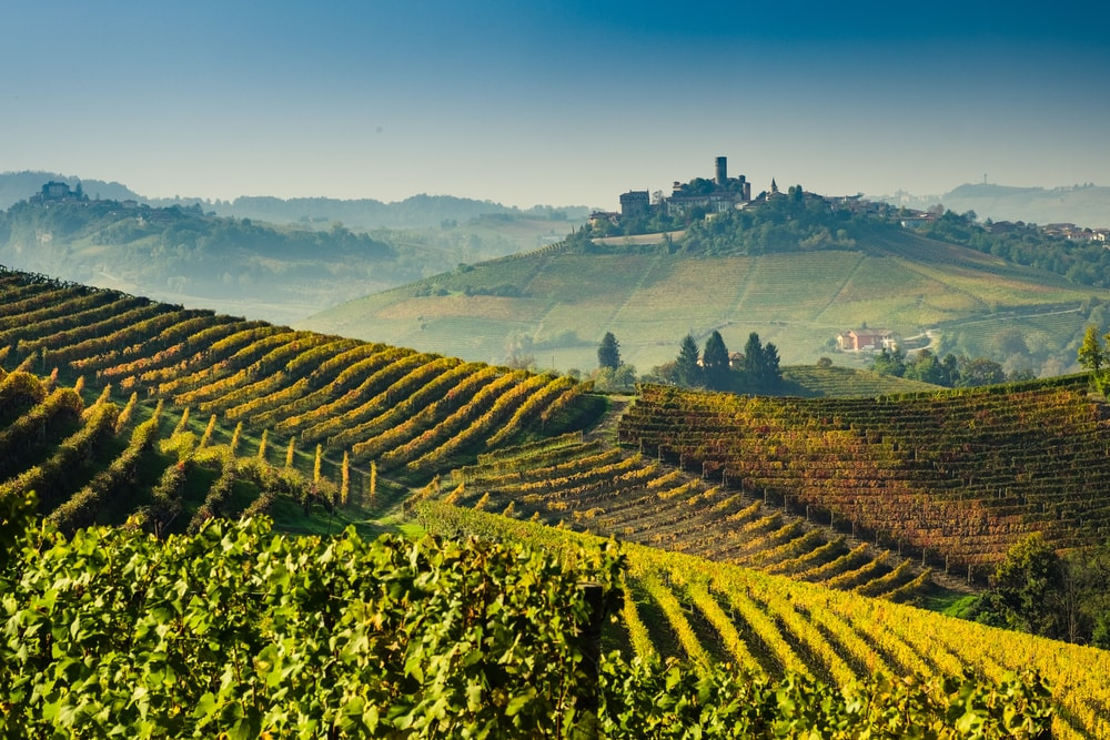 The vineyard covered hills of the Langhe region   Di Giorgio1978/Shutterstock