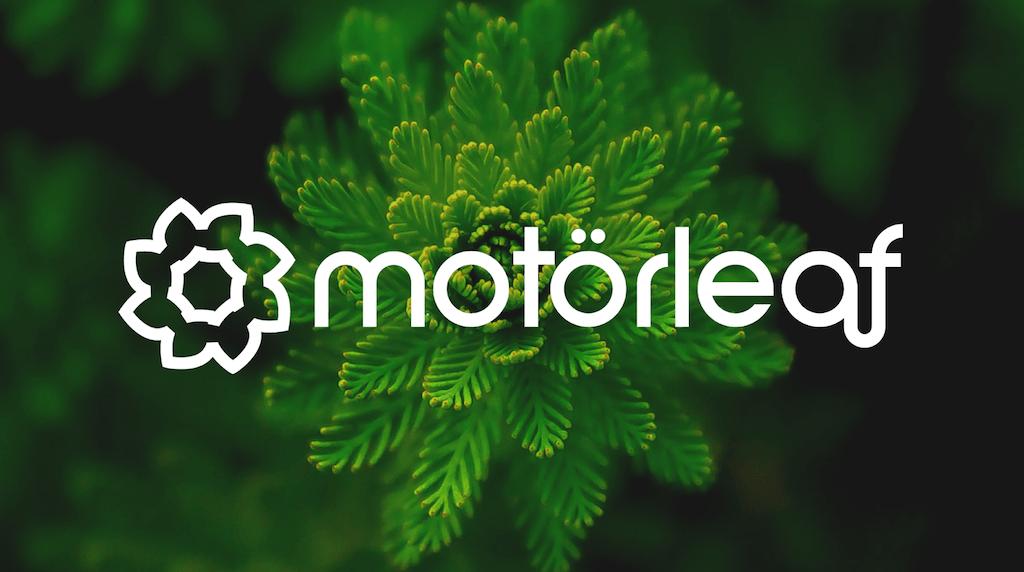leaf_logo-4