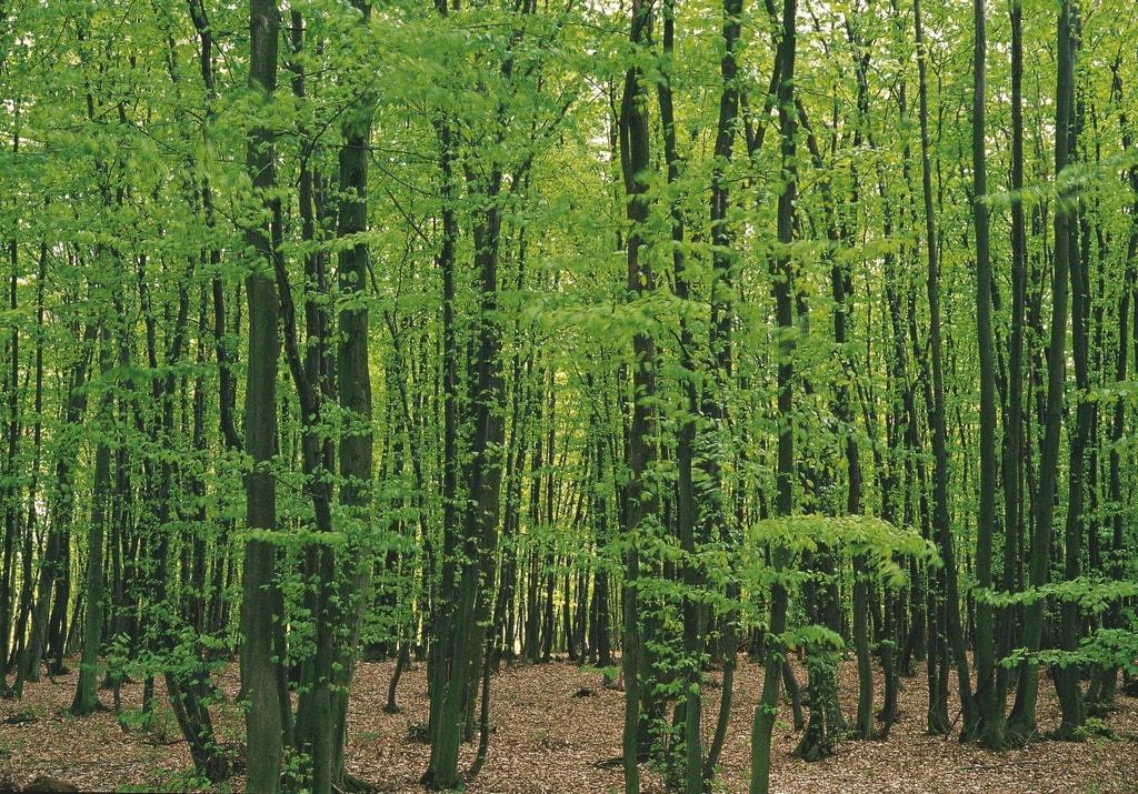 lowres_00000011272-vienna-woods-springtime-oesterreich-werbung-Herzberger - Edited